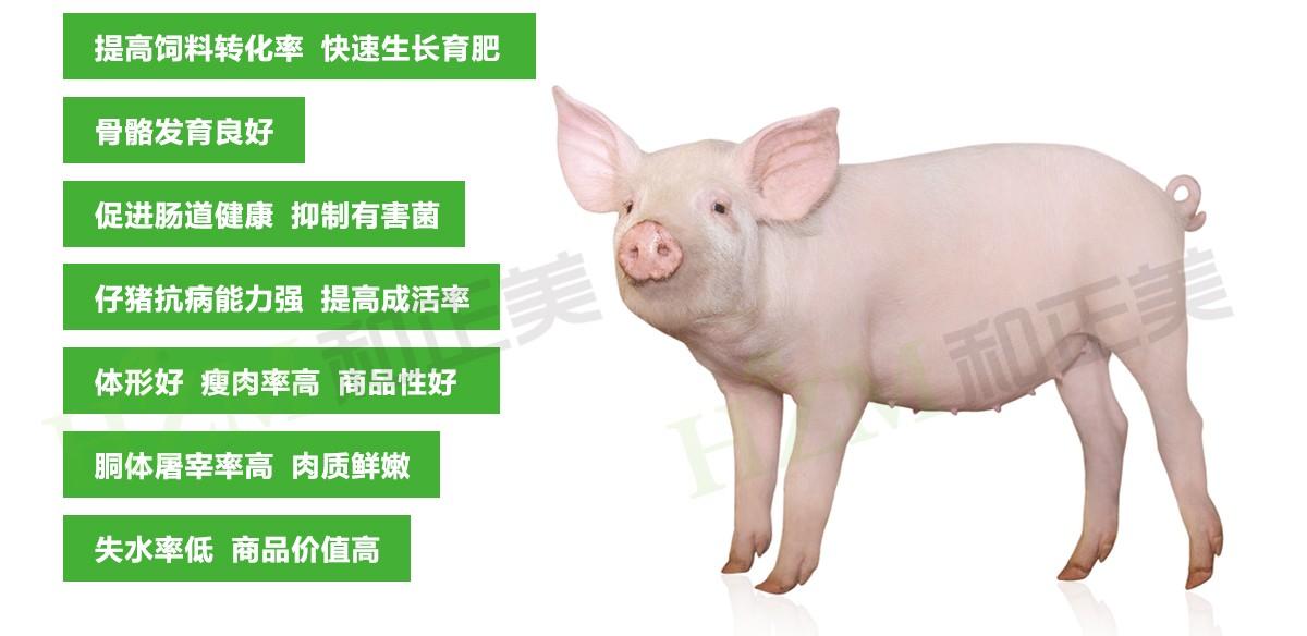 育肥猪.jpg